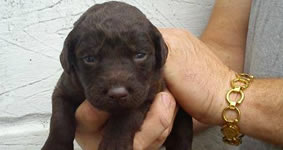 cat and dog breeders puppys for sale